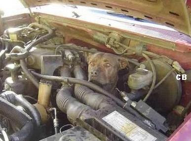 Dog in engine compartment (4) 2