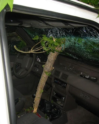  Cars Have To Confront Trees (8) 3