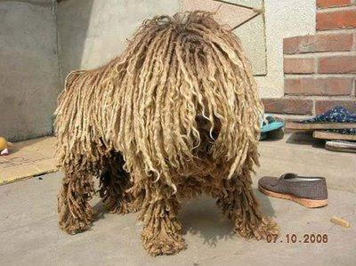 Dog (4) 1