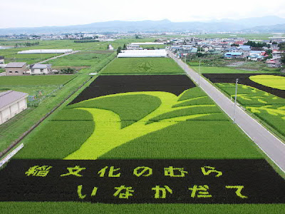 Beautiful Rice Paddy Art (4) 3