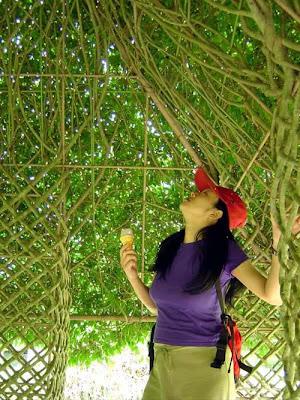 Designer Tree (3) 2