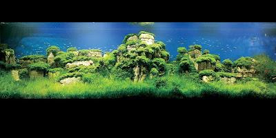 The 2008 International Aquatic Plant Layout Contest (3) 1
