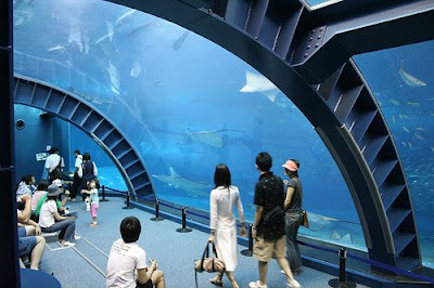Cool Aquariums and Unusual Fish Tanks Designs (50) 6