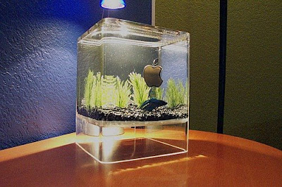 Cool Aquariums and Unusual Fish Tanks Designs (50) 25