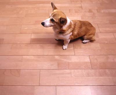 Dog Friendly Home Designs(18) 12