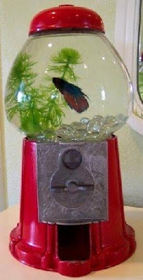 14 Creative and Cool Fishbowl Designs (14) 10