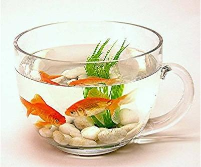 14 creative and cool fishbowl designs likepage for Cool fish bowls
