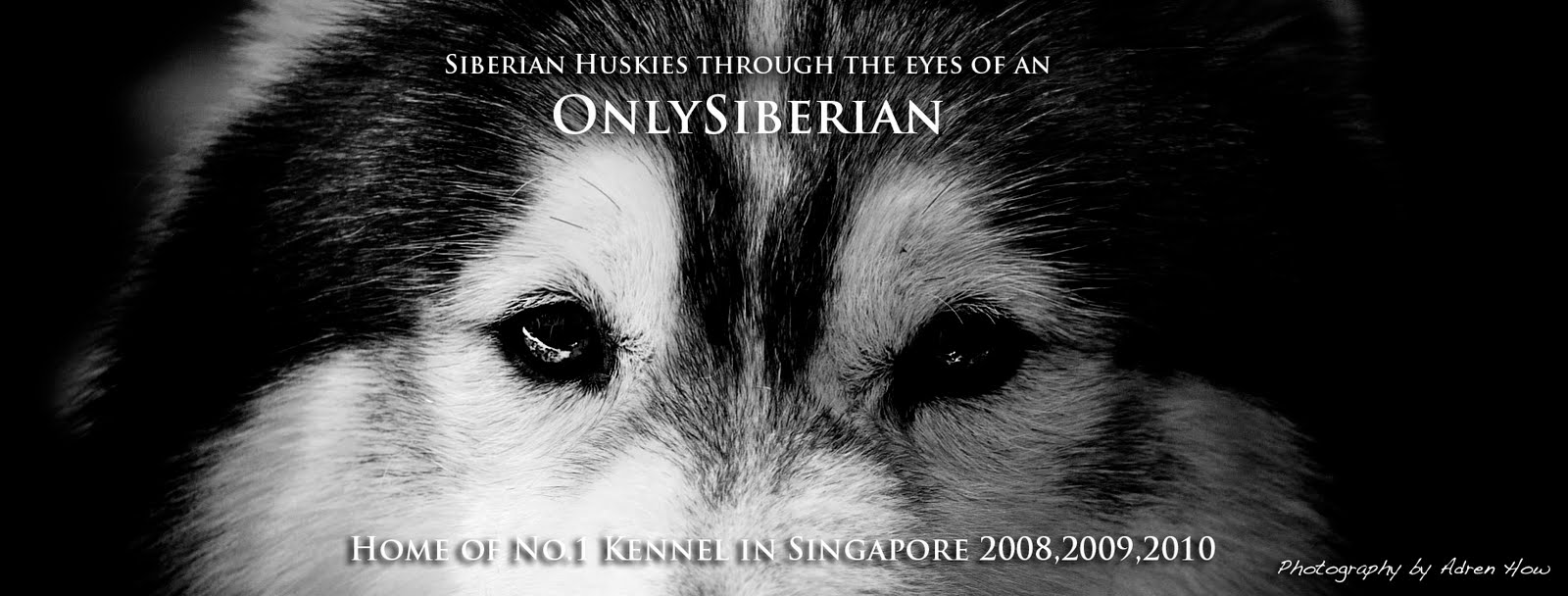 ONLYSIBERIANS/DEKTOS-      Home of No.1 Kennel in Singapore