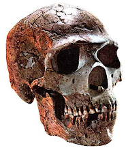 Cráneo neandertal de Skull
