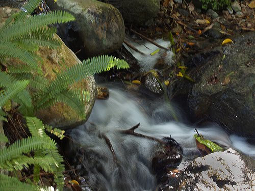 the importance of the rainforests J rainforest role in the water cycle  although the role of rainforests in the global water cycle is relatively small compared to that of the oceans,.