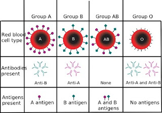 ABO_blood_type