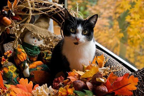 Write On Target Thanksgiving Kitty Says