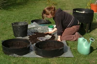 Sorting the wormery compost
