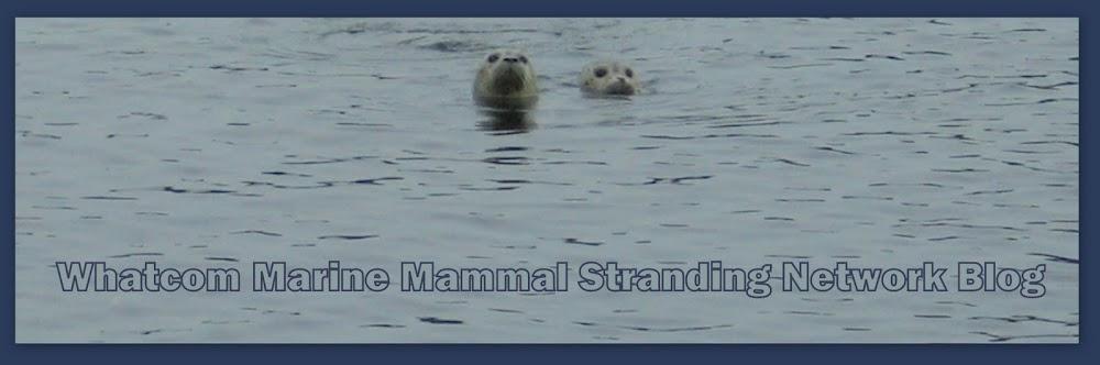 Whatcom Marine Mammal Stranding Network Blog