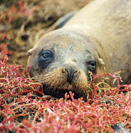 Photos from the Galápagos Islands