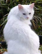 . the white cat priscilla starling .