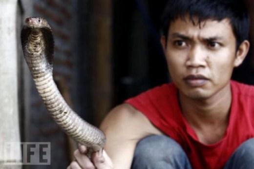 برجر الثعابين في سنغافورة-غرائب وعجائب-منتهى