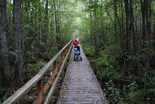 Ute i den trolska skogen...
