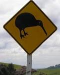 Another kiwi