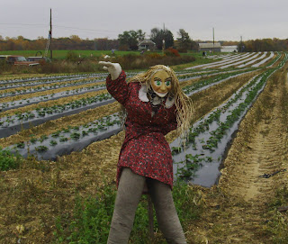 lone scarecrow
