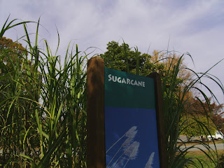 sugarcane plant and sign