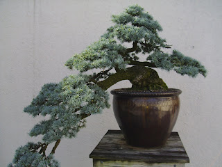 traditional bonsai
