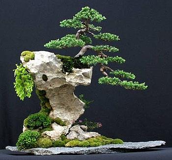 Bonsai binabagus penjing and bonsai for Most expensive bonsai tree ever