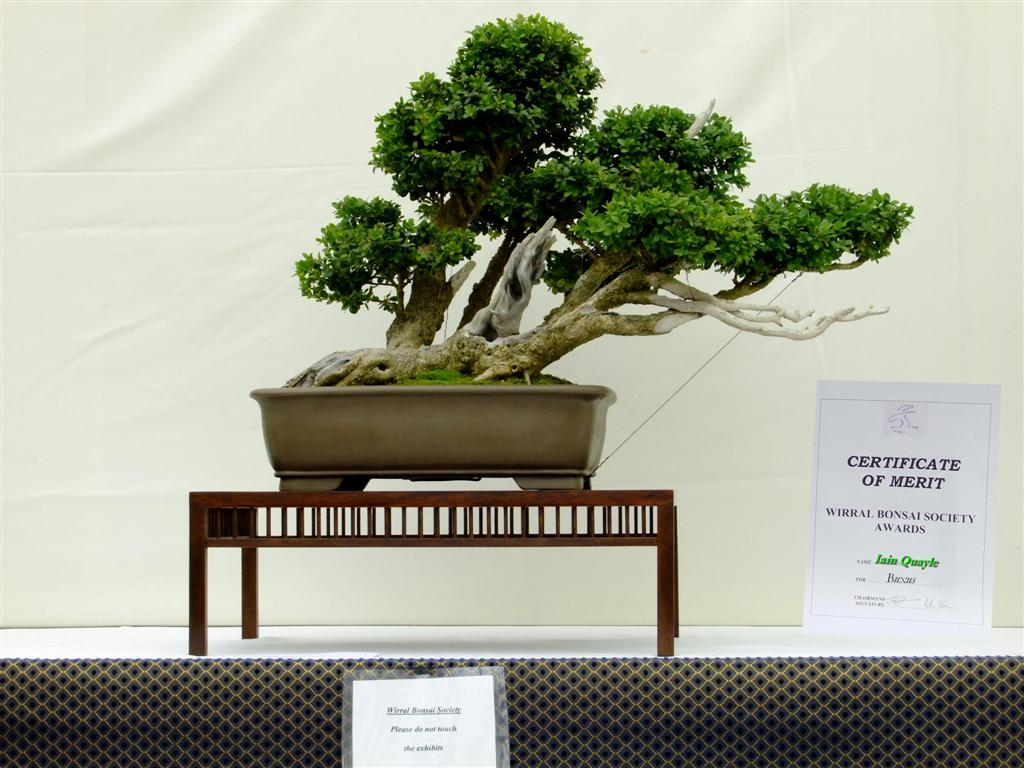 Wirral Bonsai Society Wirral Bonsai Show 2010 Certificates Of