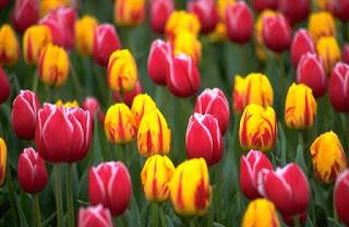 Feels like Spring is here!