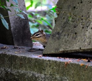 and a Graveyard Chipmunk