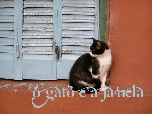 O Gato e a Janela
