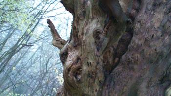 Wychbury Log