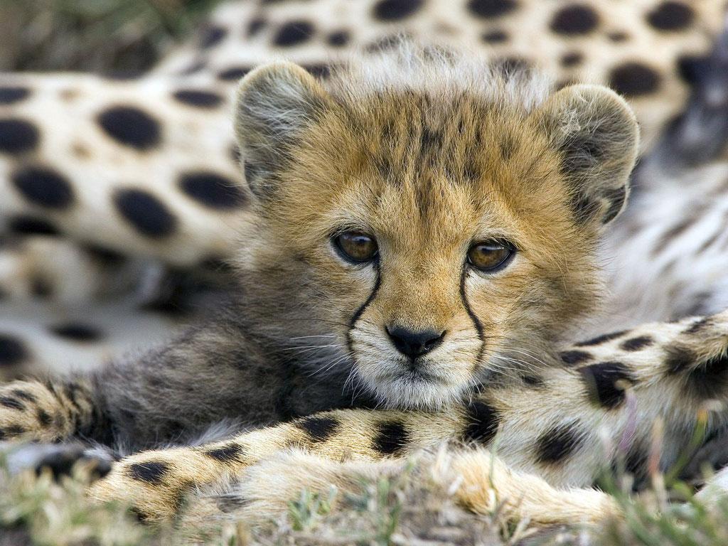 los animales terrestres la ciencia de los animales