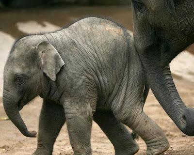 Mascotas y bebés Ser Padres