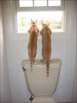 Две киски созерцают окрестности через окошко туалета