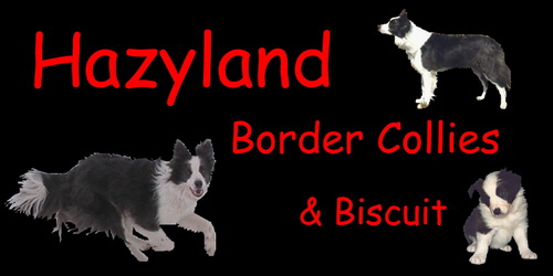 Hazyland Border Collies & Biscuit