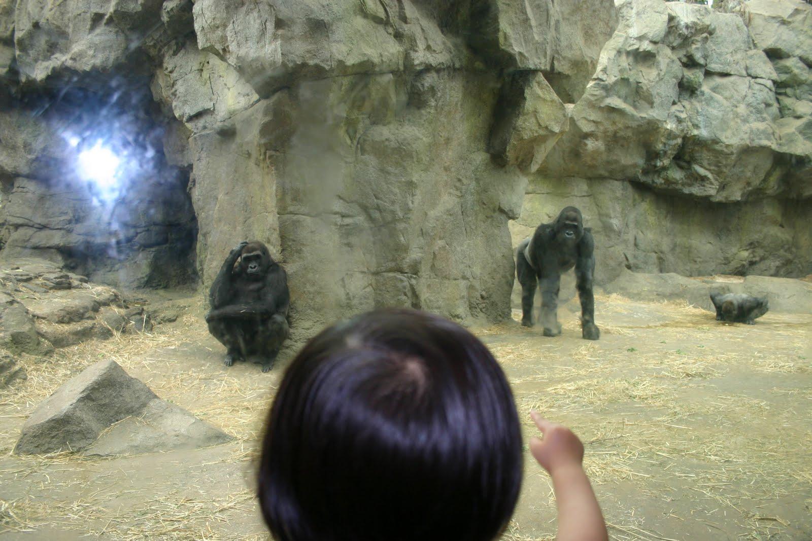 跃跃的成长日记 put me in the zoo dr seuss