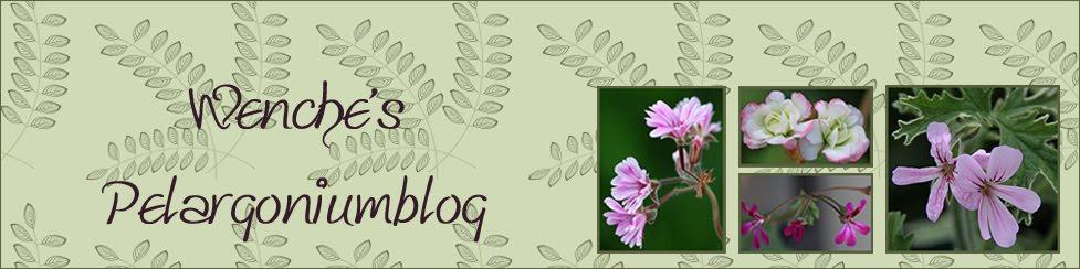 Twins Pelargonium