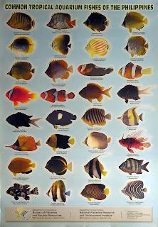 Aquarium Daftar Nama Ikan Indonesia Nama Inggris Dan Harga Export