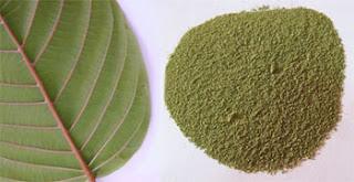 Kratom Powder from sumatra the best indo kratom