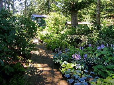 The hosta garden. Deep shade. Garden sheds and office in back.