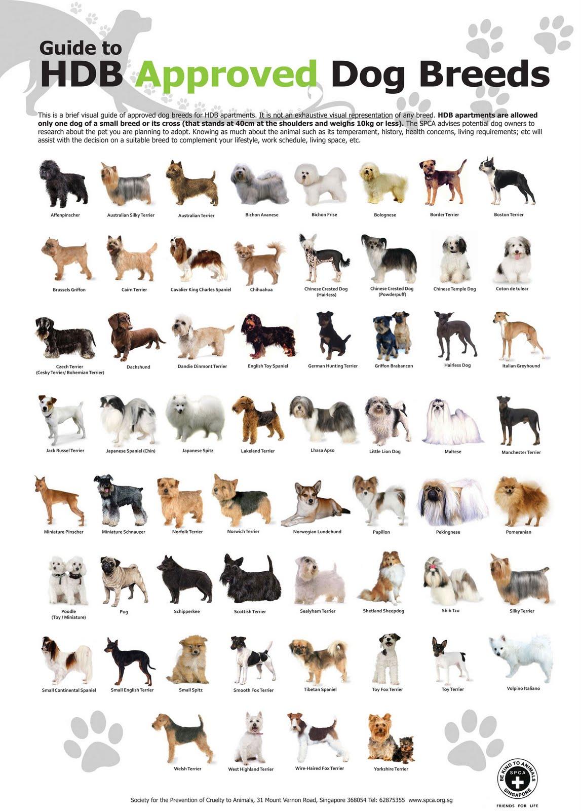 آزادی درون: لیست نژادهای سگ