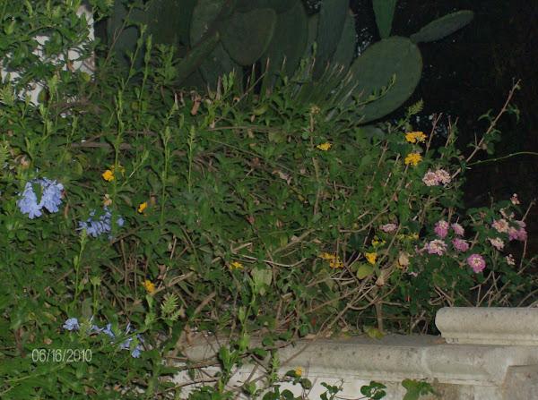 Le piante e i fiori di un angolo del mio giardino..sono lo specchio di un angolo del mio cuore!