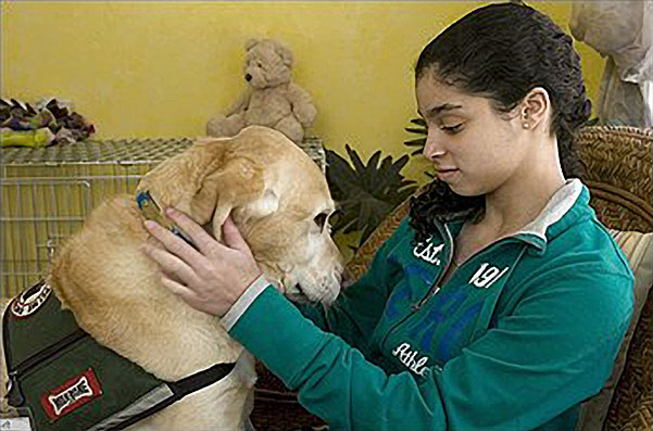Psychiatric Service Dogs And Pets
