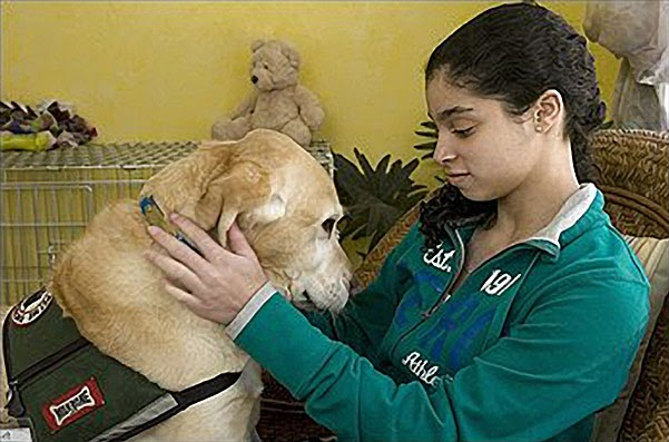 Petting Service Dogs