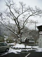 立木も雪化粧