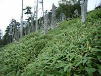 中ノ尾根山登山道9