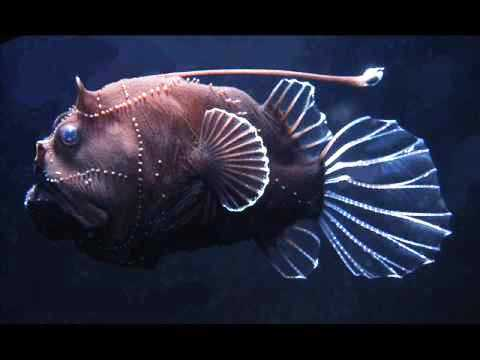 Ichigo milky deep sea water fish for What do angler fish eat