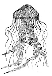 Denizanasıdır da