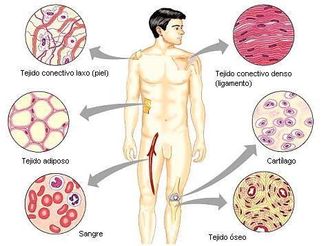 www tipos de celulas com: